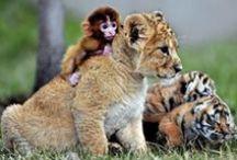 Animals : Babies