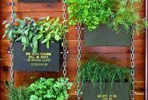Gardening : Ideas
