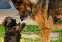 Animals : Dogs & Puppies