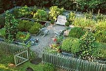 Vege Patch / Anything and Everything to do with gardening.