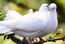 Animals : Also Express Love