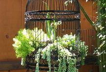 Gardening : Succulent Ideas