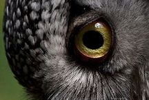 Animals : Eyes of all Creatures / by Caroline Rainbird
