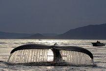 Animals : Ocean Mammals