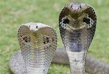 Animals : Snakes & Crocs