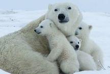 Animals : Family