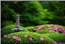 Azaleas, Japan gardens / Azaleas, Japan, Garden, Japanese Garden