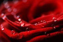 `•♥•´ Color: Red - Colore: Rosso `•♥•´