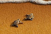 Animals : Amphibians, Turtles, Lizards Etc / Frogs, Tortoises, Lizards, Turtles and the like.