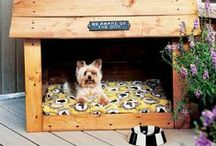 Pet-Friendly Design For Your Favorite Pooch / Be pet friendly in your home!