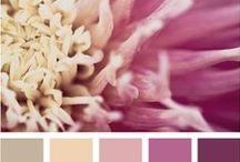 Colors combo: Pallettes