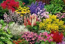 Nature: ✿ Outdoor, gardens, etc. ✿
