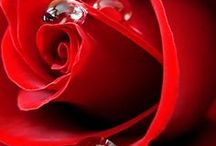 Nature: ✿ Rose rosse per te.... Red roses for you... ✿ / #redroses #red #roses