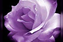 Nature: ✿ Roses ✿ / #rosa #rose #roses