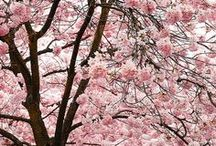 Nature: ✿ Plants and trees with flowers - Natura: piante ed alberi con fiori ✿