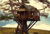 Tree houses ! / My dream..