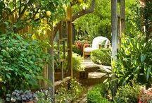 General Garden ideas
