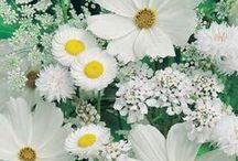 kukkaset