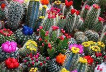 floral fantastic