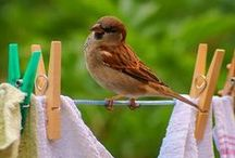 I LOVE BIRDS, all kinds but mostly the little ones / by Edith Jasser Realtor-Chicago