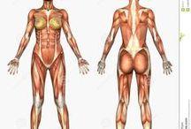 Drawing: Body