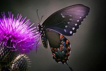I Love Butterflyes