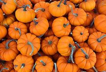 Holidays - Thanksgiving & Fall / by Liz Hofacker (Vallis)