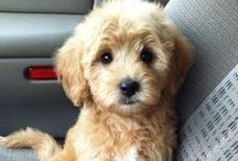 I do like dogs too.... big and small / by Edith Jasser Realtor-Chicago