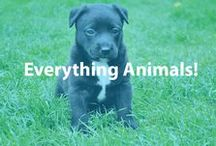 Everything Animals! / Pets are like children - you need to treat and raise them well. Even so, there are many ways to save money while playing with your pet.  / by Cheapism.com