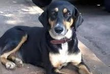 My people / My dogs: Thor, Luna & Cachorrinho Other cute dogs and cats Awesome animals