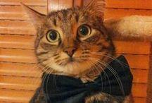 i miei amati gatti