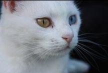 intelligente Katzen