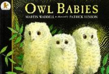 Bird Picture Books / Picture Books about Birds