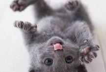 besondere Tierfotos /  special animalpictures / Außergewöhnliche und lustige Tierfotos