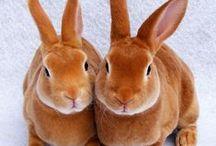 Kaninchen /Rabits / Bilder und Tipps zur Haltung, Zucht und Verzehr.