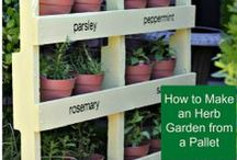 Gardening How-To / Gardening tips, tools, and how-tos! Garden DIY projects, garden hacks, ways to repurpose, recycle, or upcycle in the garden....