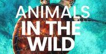 Wild Animal Experiences