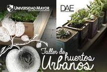 Charlas 2013 UMayor / Charlas, talleres y noticias de actualidad de Universidad Mayor.