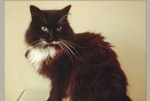 Animals / zwierzęta, zwierzaki, kot, koty, cat, cats, anilams, gatto