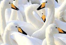 Photo's of birds