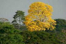 ÁRBOLES Y PLANTAS - TREES &  PLANTS - ARBRES ET PLANTES / by Joaquín V. Espinosa Gómez