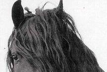 Horses & Equestrians//