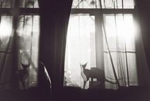 #cats / + #cats @ http://chicksnpets.com