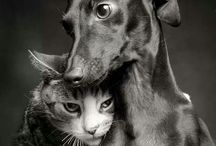 #pets / + #pets @ http://chicksnpets.com