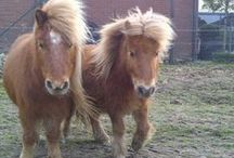 My pets and horses