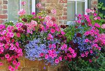 Garden / My favourite inspirational garden images