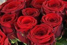 Valentijns Dag 2016 || Quickjewels.nl / Hartjes, rozen en overal is alles rood! Het is Valentijns dag! De dag om je geliefde te verrassen met een beetje extra aandacht of een klein cadeautje!  Vergeet het niet zondag 14 Februari 2016 is het alweer zover!
