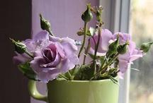 Lilac & Green