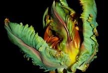 color - flora