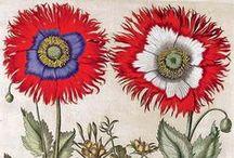color - mandala flower